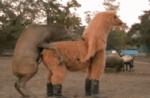 Любвеобильное животное