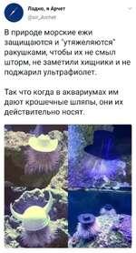 """ч/ Ладно, я Арчет @з1г_АгсЬег В природе морские ежи защищаются и """"утяжеляются"""" ракушками, чтобы их не смыл шторм, не заметили хищники и не поджарил ультрафиолет. Так что когда в аквариумах им дают крошечные шляпы, они их действительно носят."""
